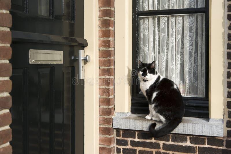 Gatto sul davanzale della finestra immagine stock immagine di domestico cozy 20013281 - Davanzale finestra interno ...