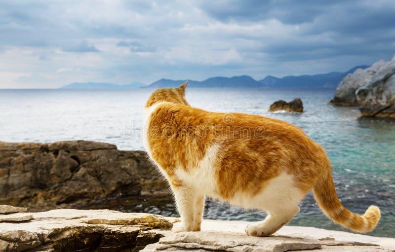 Gatto sul mare fotografia stock libera da diritti