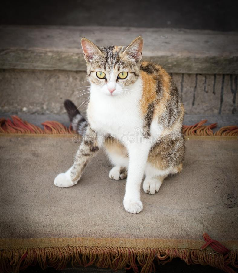 Gatto sul portico vicino alla casa fotografia stock
