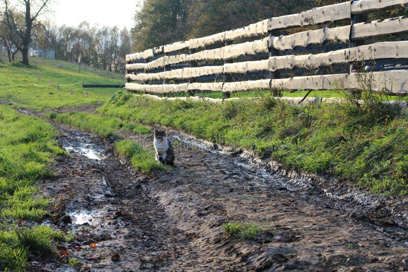 Gatto sul sentiero per pedoni fangoso fotografia stock libera da diritti