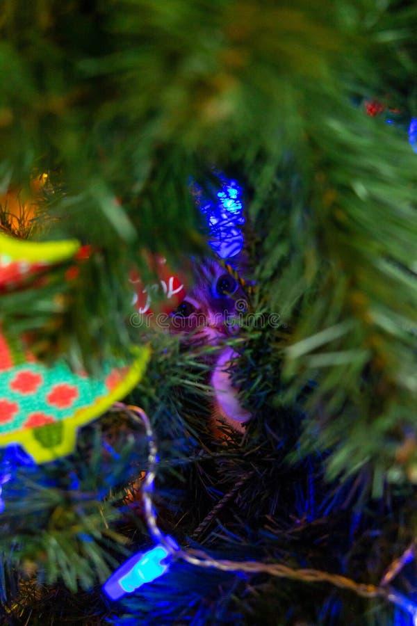 Gatto sull'albero di Natale Gattino sveglio rosso Nuovo anno immagine stock libera da diritti