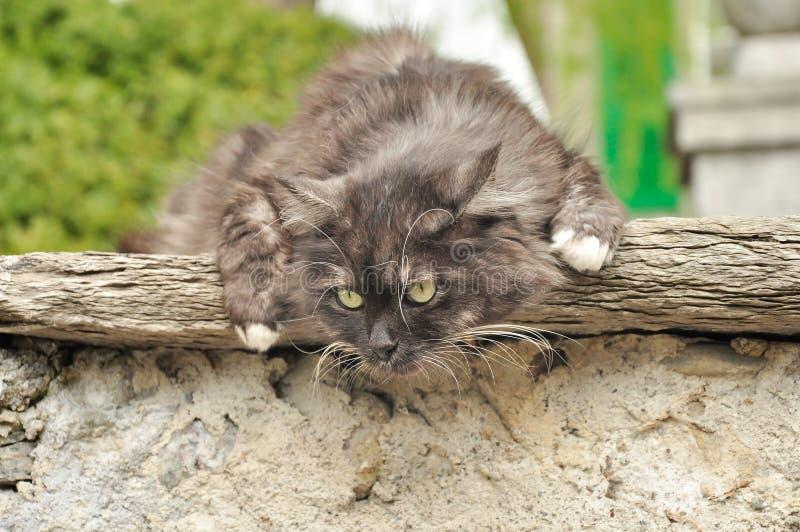 Gatto sulla parete della casa fotografia stock