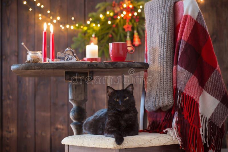 gatto sulla sedia con la tavola di legno con la decorazione di Natale fotografia stock