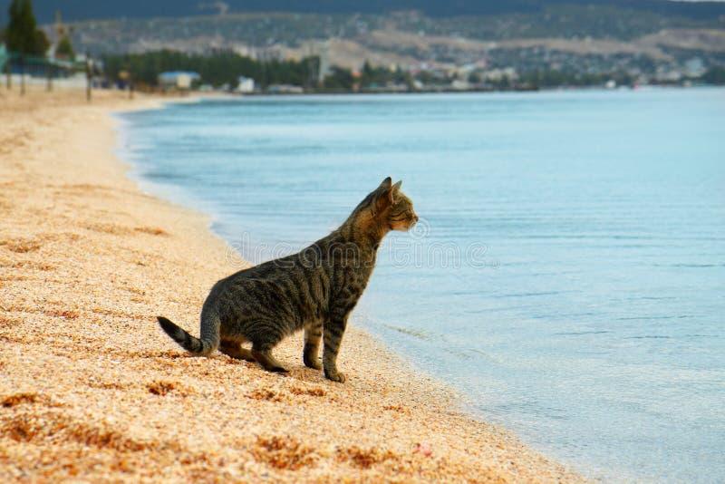 Il gatto esamina il mare immagine stock