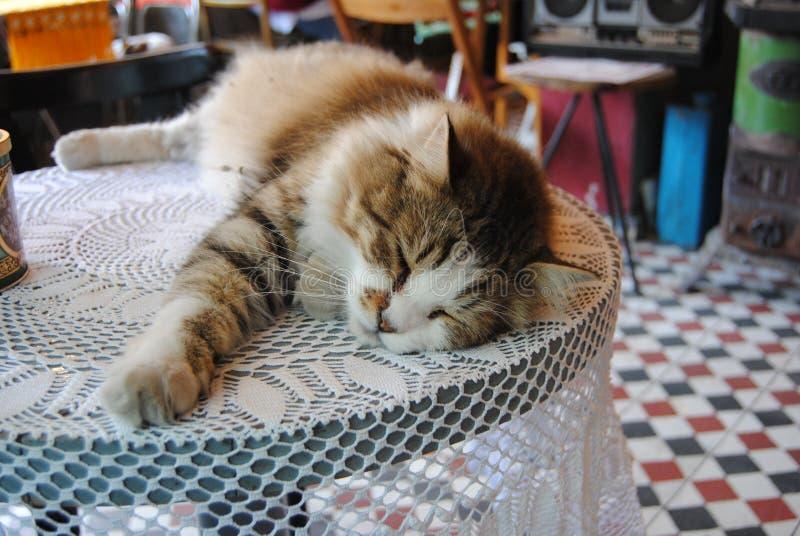 Gatto sulla tavola in caffè fotografie stock