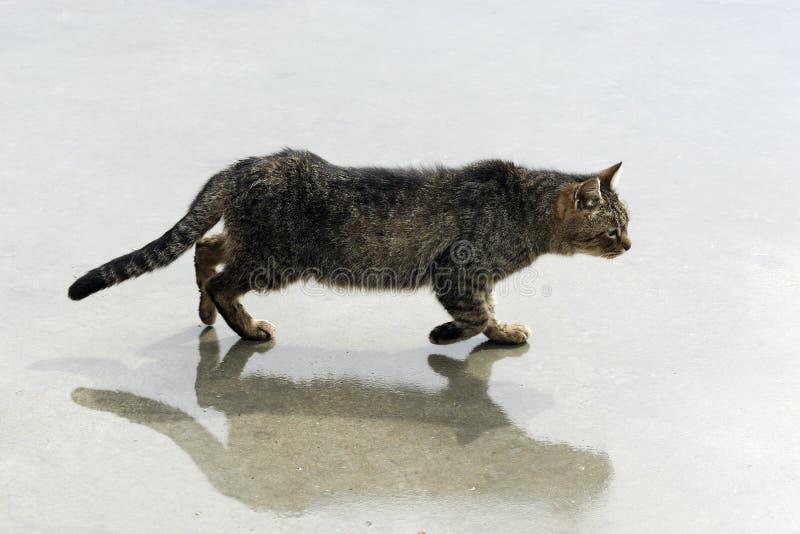 Gatto sulla via fotografia stock libera da diritti