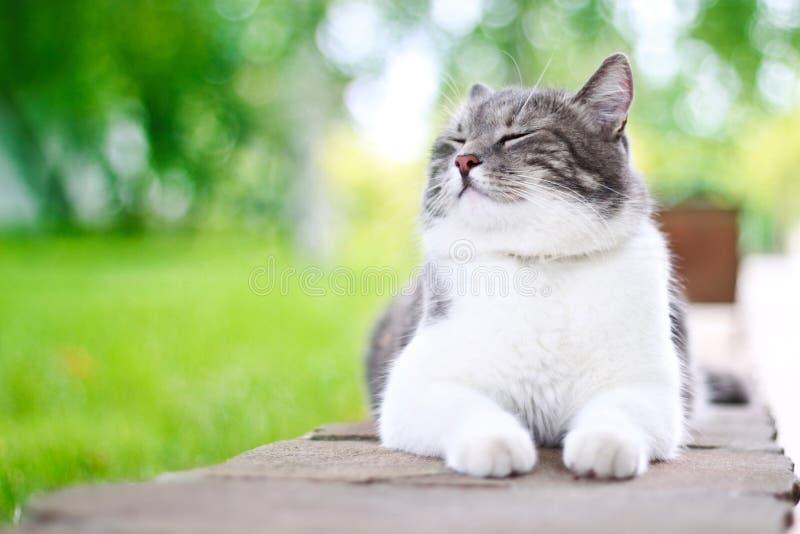 Gatto sveglio che gode della sua vita fotografia stock