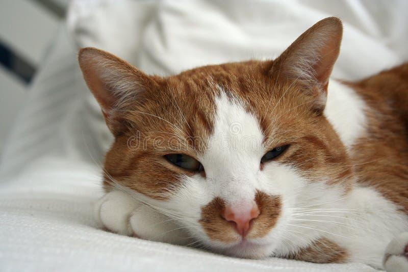 Gatto sveglio che prende un pelo su un sofà fotografie stock libere da diritti