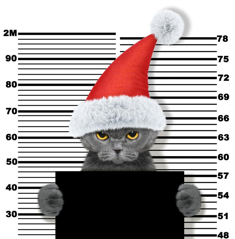 Gatto sveglio come Babbo Natale in prigione Su bianco immagini stock