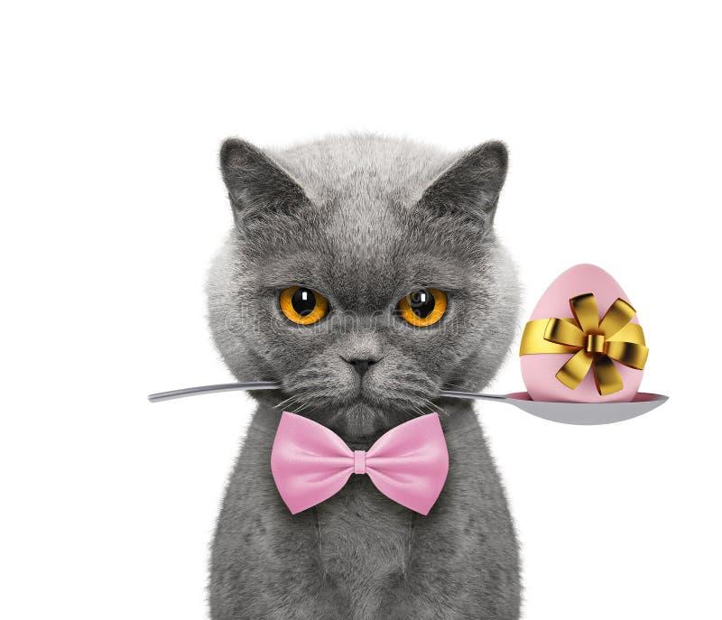 Gatto sveglio con il cucchiaio e l'uovo di Pasqua Isolato su bianco fotografia stock libera da diritti