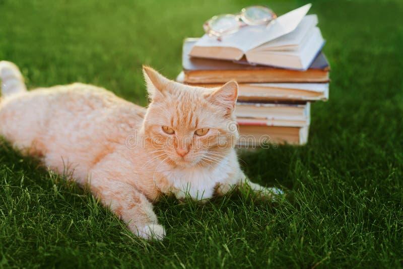 Gatto sveglio con il libro ed i vetri che si trovano sul prato verde fotografia stock libera da diritti