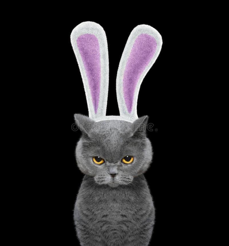 Gatto sveglio con le orecchie del coniglietto -- isolato sul nero immagini stock libere da diritti