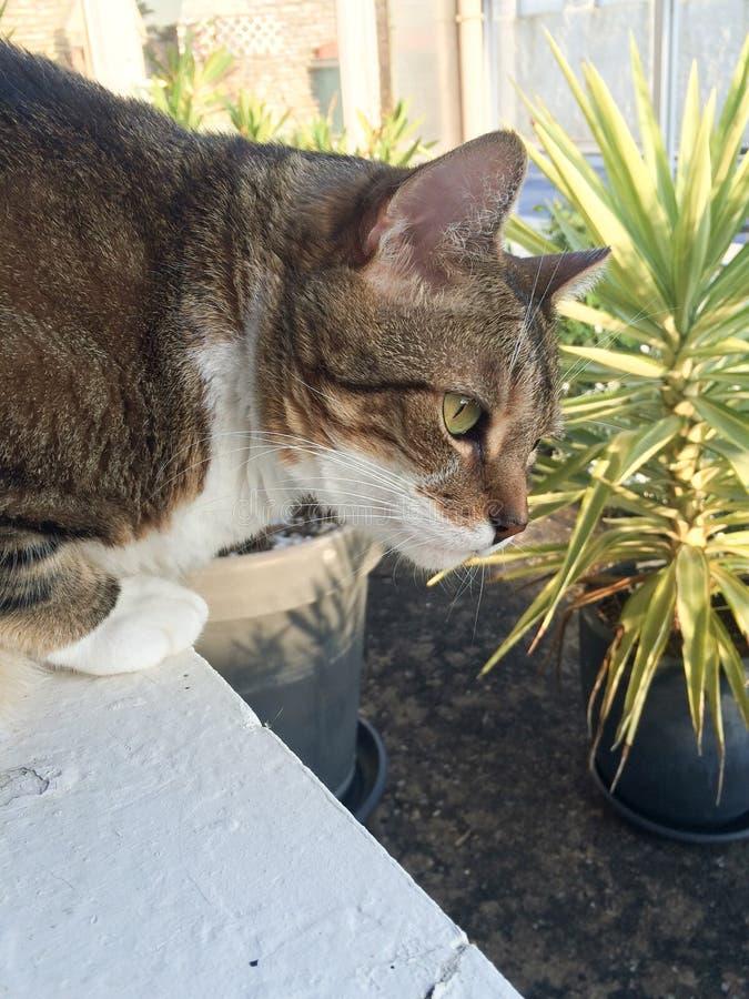 Gatto sveglio dei peli di scarsità in giardino all'aperto che gioca fuori un giorno soleggiato immagine stock
