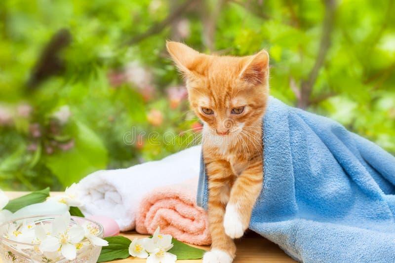 Gatto sveglio del gattino fotografia stock