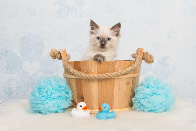 Gatto sveglio del gattino della bambola di straccio in un canestro di legno fotografia stock libera da diritti