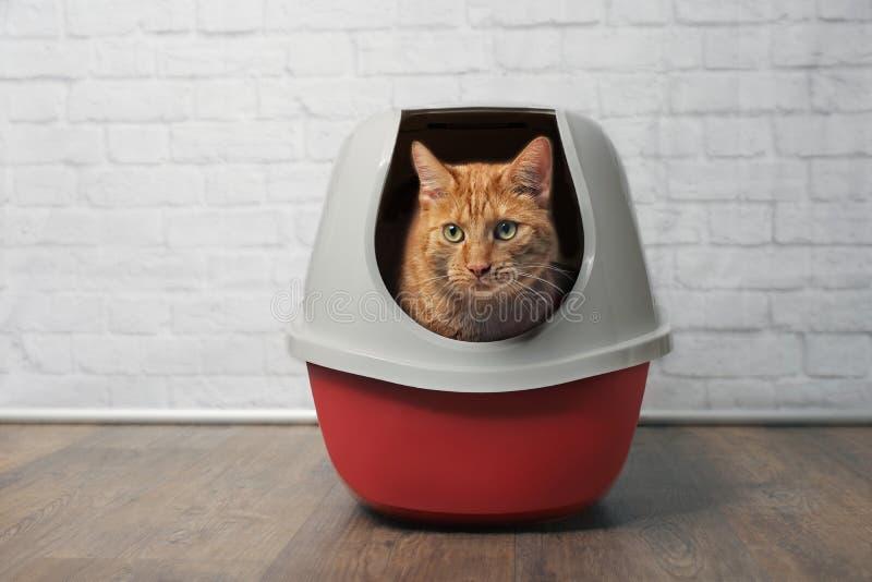 Gatto sveglio dello zenzero facendo uso di un cestino per i rifiuti rosso e chiuso fotografia stock