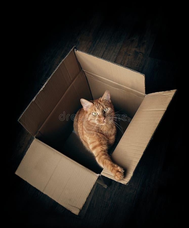 Gatto sveglio dello zenzero in una scatola di cartone che sembra curiosa alla macchina fotografica immagini stock