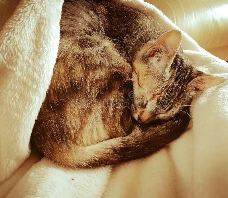Gatto sveglio di sonno fotografia stock