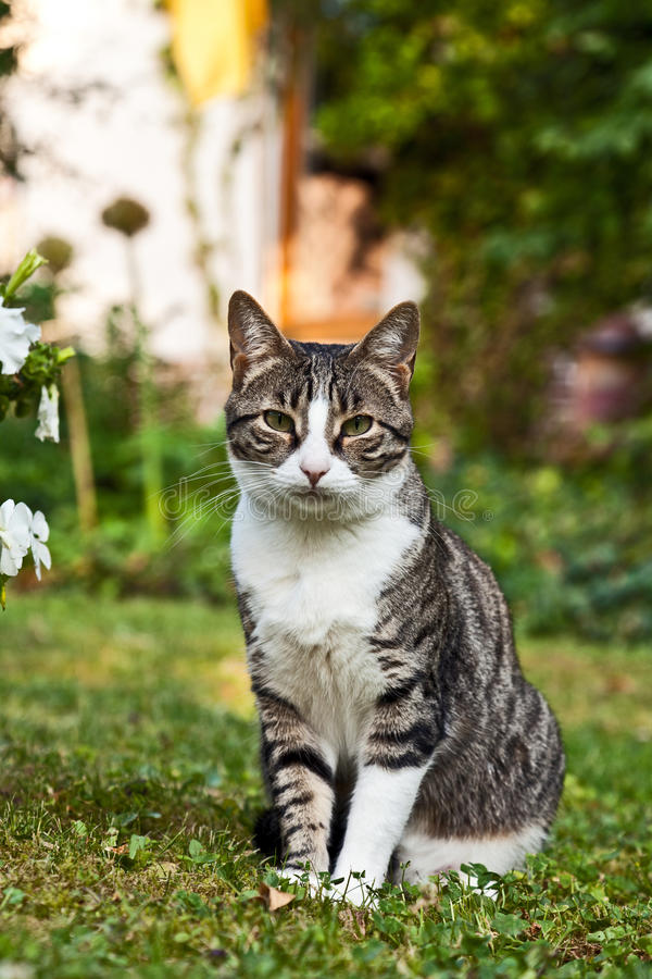 Gatto sveglio nel giardino immagine stock