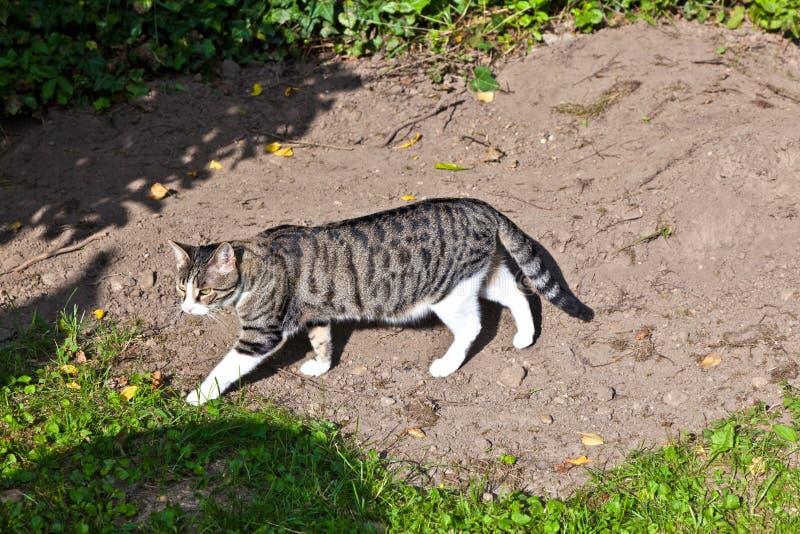 Gatto sveglio nel giardino fotografia stock