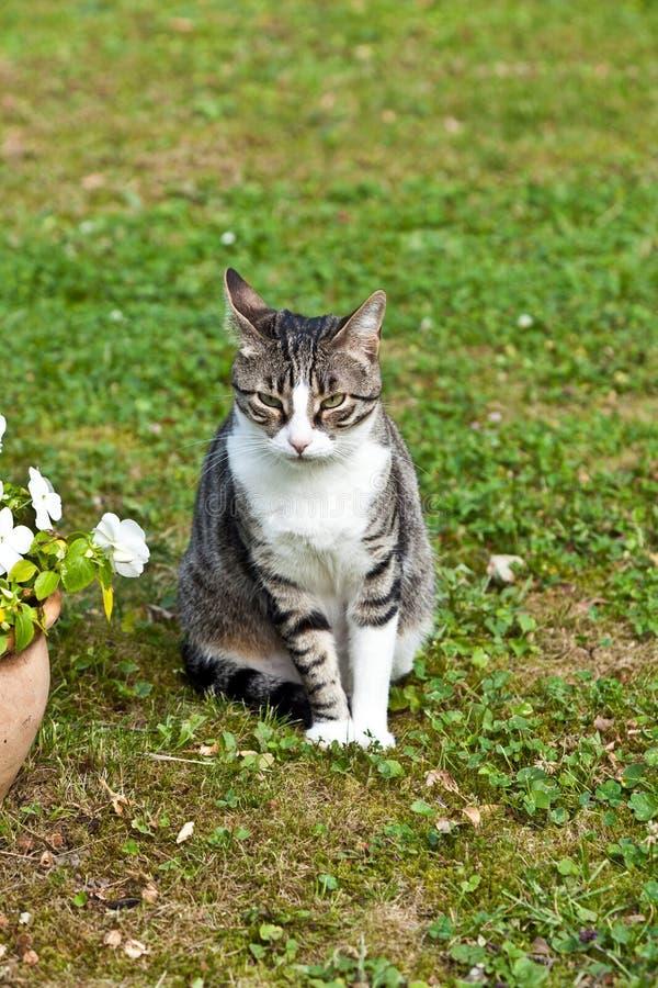 Gatto sveglio nel giardino fotografia stock libera da diritti