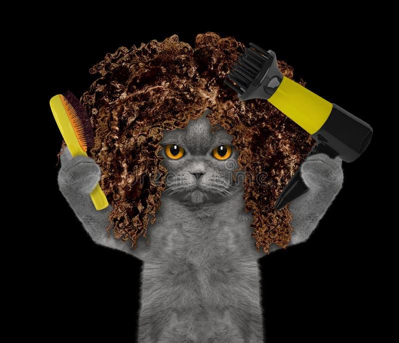 Gatto sveglio nel salone governare della stazione termale Isolato sul nero fotografia stock