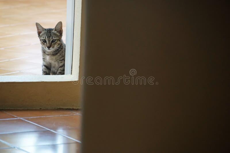 Gatto sveglio smarrito del gattino ad un tempio Tailandia fotografie stock