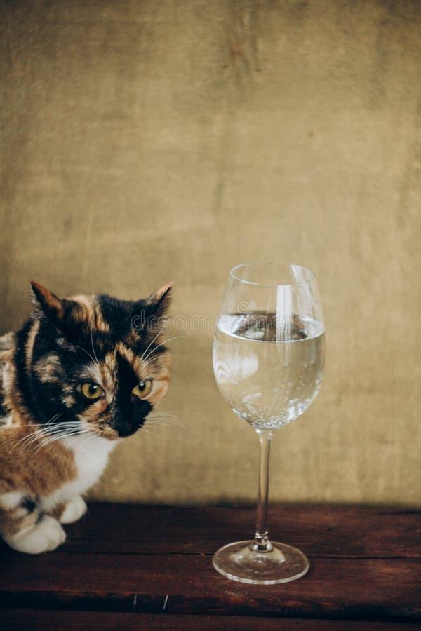 Gatto tricolore che si siede accanto ad un vetro di vino bianco su un fondo marrone di legno rustico resto, festa, partito Bevand immagini stock libere da diritti