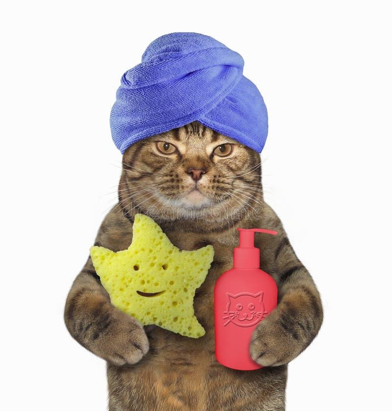Gatto in turbante blu con sciampo e la spugna fotografia stock