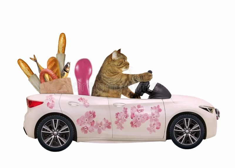 Gatto in un'automobile rosa con alimento immagini stock