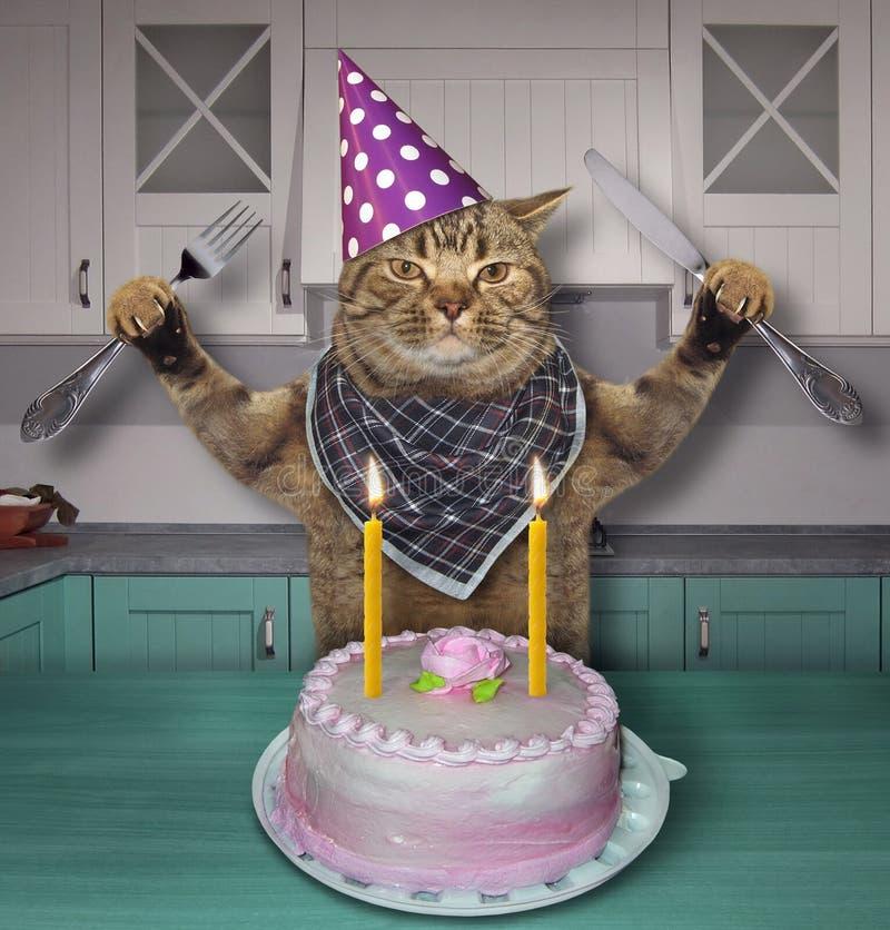 Gatto in un cappello di compleanno con il dolce fotografia stock