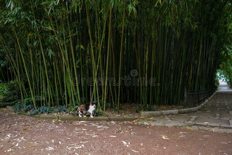Gatto in un giardino botanico immagine stock