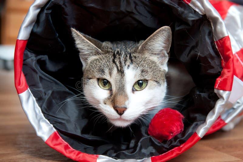 Gatto in un giocattolo del gatto immagine stock