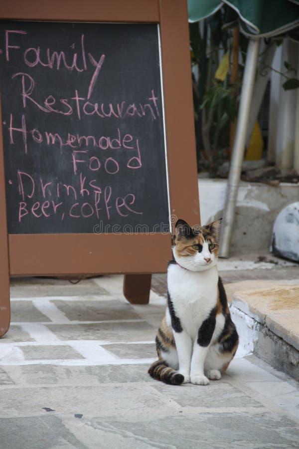 Gatto in un ristorante greco immagini stock