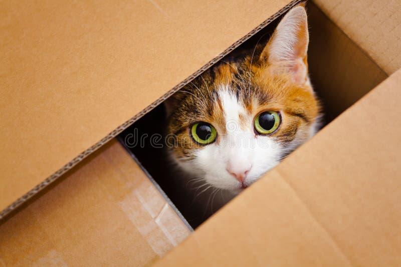 Gatto in una casella fotografie stock