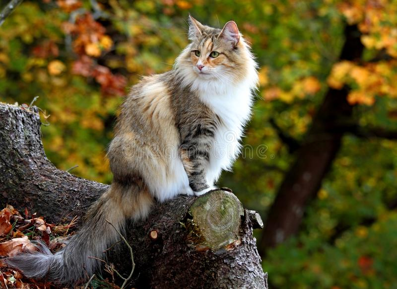 Gatto in una foresta fotografia stock libera da diritti