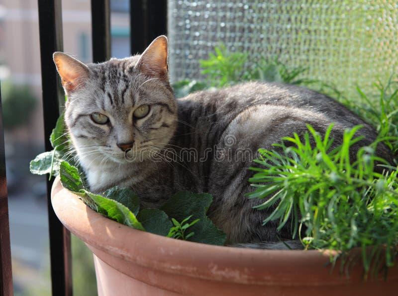 Gatto in vaso di fiore immagine stock