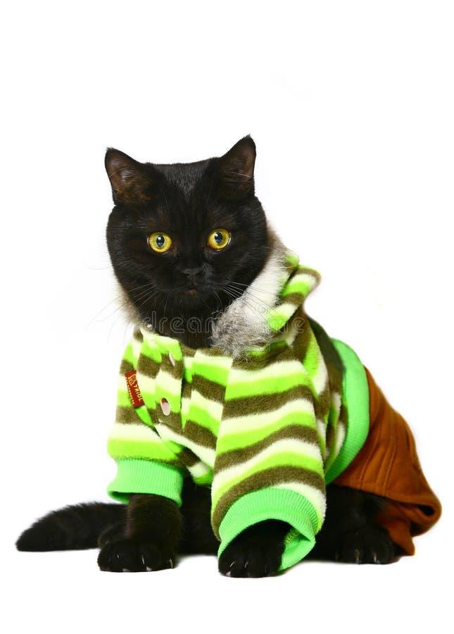 Gatto in vestiti. fotografie stock libere da diritti