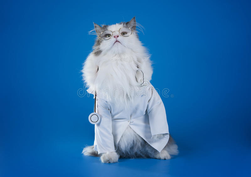 Dott. gatto fotografia stock