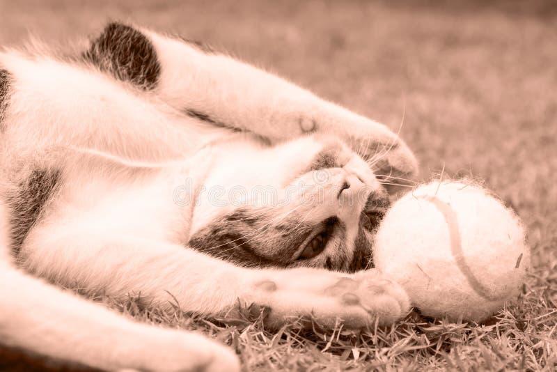 Gatto vivace (seppia) fotografie stock