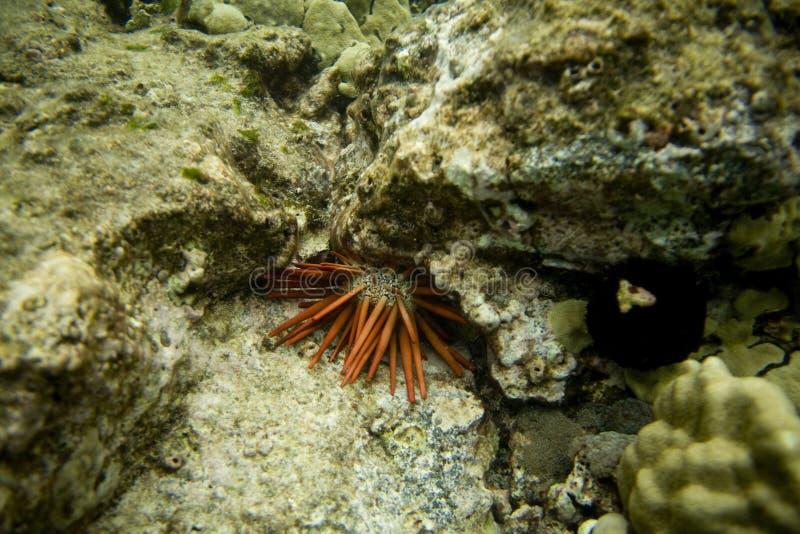 gatubarn för hav för korallnederlagrev royaltyfri foto