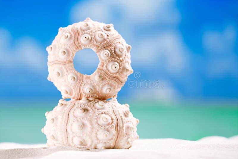 Gatubarnskalsjöstjärna med havet, på den vita sandstranden arkivbild