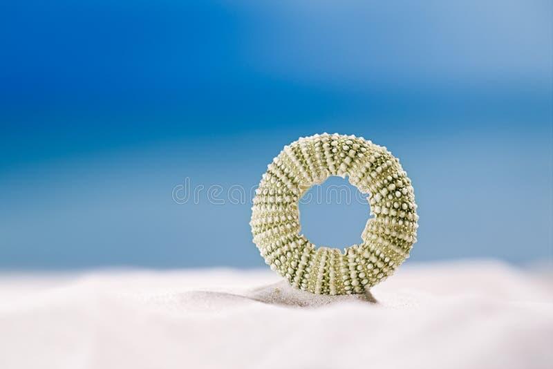 Gatubarnskalsjöstjärna med havet, på den vita sandstranden royaltyfria foton