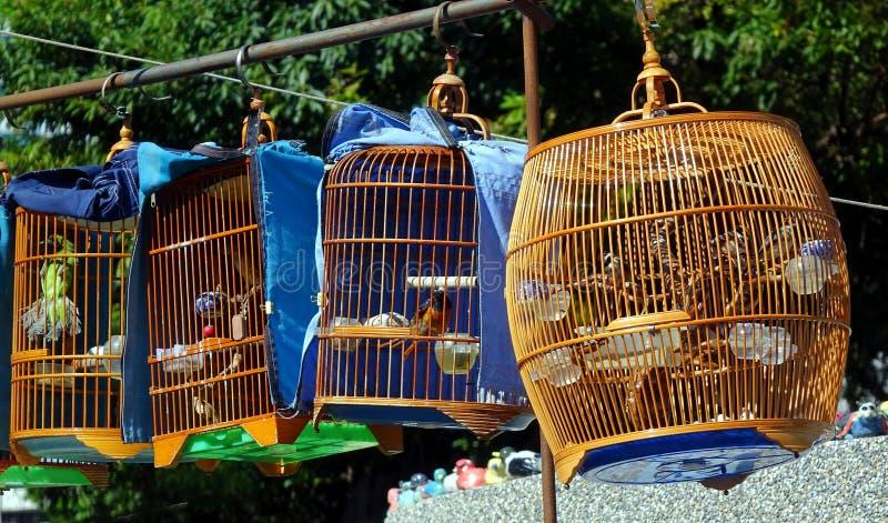 Gatuförsäljare Selling Songbirds royaltyfri foto