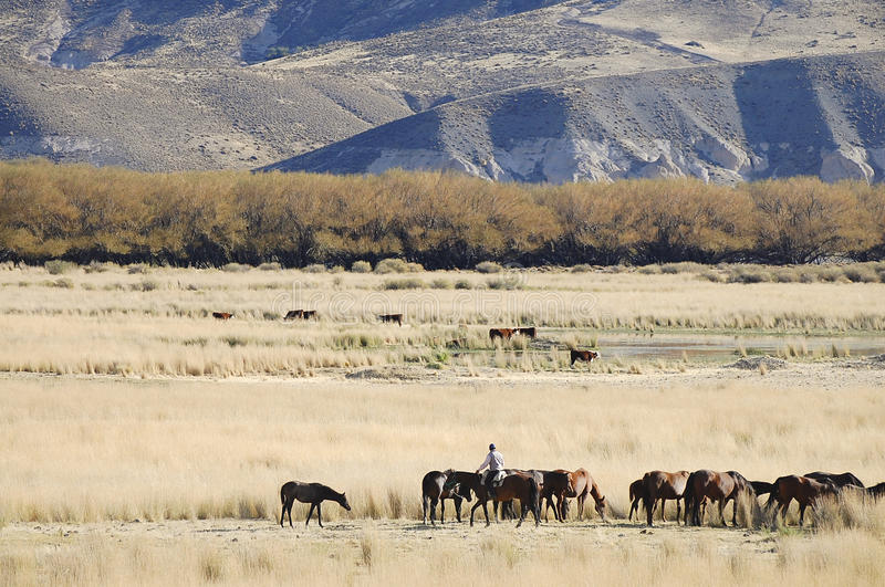 Gaucho in Patagonië - Argentinië stock afbeeldingen