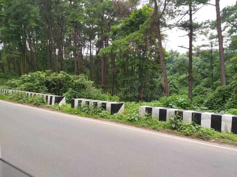 Gauhati zu Shillong-Straße Meghalaya-Wald stockbild