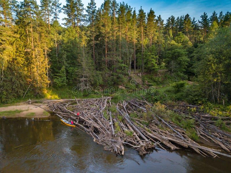 Gauja river, national park in Latvia. River and island. Ligo bonfire. Latvia, Gauja river beach. Congestion of trees on the river stock photography