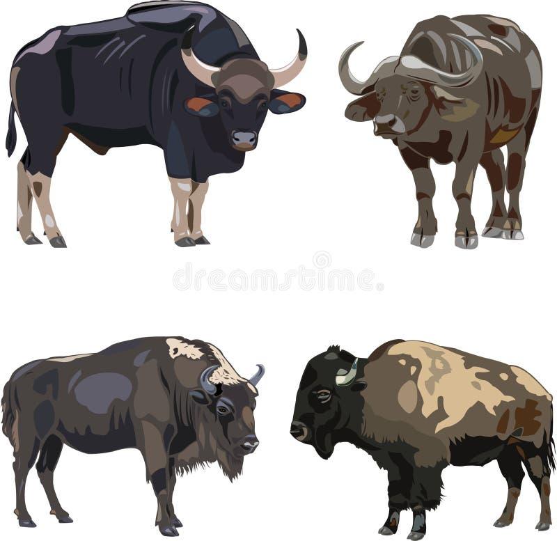 gaur европейца зубробизона афроамериканца иллюстрация штока
