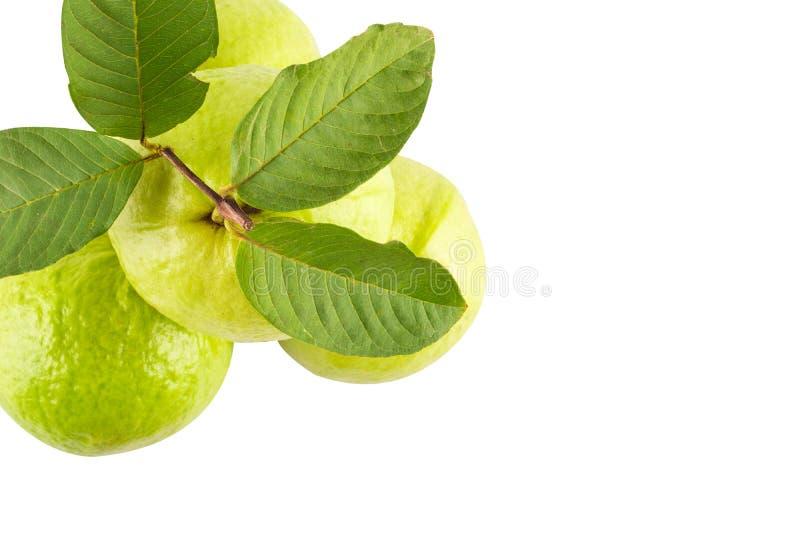 Gava- och guava-blad på vit bakgrund, livsmedel från jordbruket isolerade royaltyfri bild
