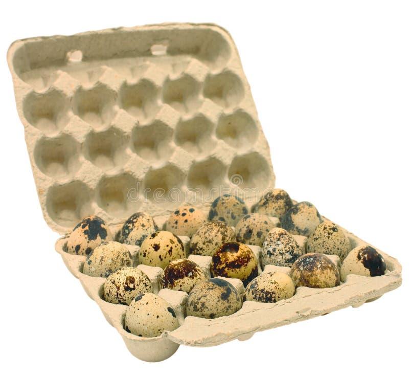 Gaveta com ovos de codorniz foto de stock royalty free